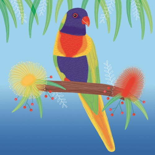 xmas lorikeet sledge illustrations card